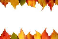 Vue des feuilles colorées d'automne d'isolement sur le fond blanc Image stock