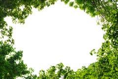Vue des feuilles d'érable et d'orme Images stock