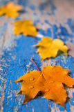 Vue des feuilles d'automne colorées vives sur le bureau cyan en bois grunge Photographie stock