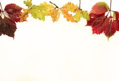 Vue des feuilles d'automne jaunes sur le fond d'isolement Image libre de droits