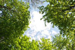Vue des feuilles de vert à travers le ciel Image libre de droits