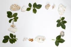 Vue des feuilles des roses et des coquilles sur le fond blanc Mémoire d'été Photo stock