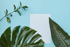 Vue des feuilles vertes de branche Image stock