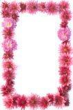 Vue des fleurs Photo libre de droits