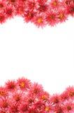 Vue des fleurs Photos stock