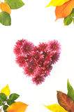 Vue des fleurs et des feuilles Photographie stock