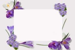 Vue des fleurs multicolores, feuilles vertes, branches sur le fond blanc Configuration plate, vue supérieure Configuration floral photo libre de droits