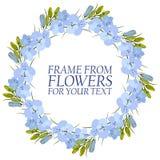 Vue des fleurs pour le texte delphinium bleu-clair de fleurs illustration de vecteur