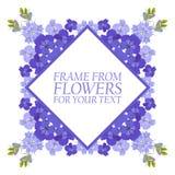 Vue des fleurs pour le texte La violette fleurit le delphinium Image libre de droits