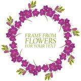 Vue des fleurs pour le texte Le cramoisi fleurit le delphinium illustration libre de droits