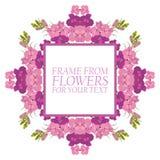 Vue des fleurs pour le texte Rose et cramoisi fleurit le delphinium illustration de vecteur