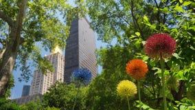Vue des fleurs pourpres de sensation en Madison Square Park clips vidéos