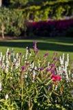 Vue des jardins Image libre de droits