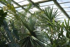 Vue des jardins de Kew Image stock