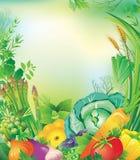 Vue des légumes et des herbes Photographie stock