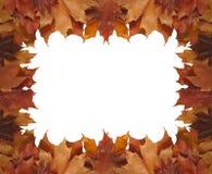 Vue des lames d'érable d'automne Photographie stock