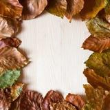 Vue des lames de hêtre d'automne Photo stock