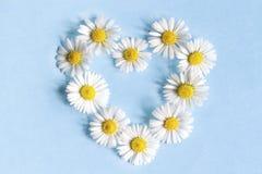 Vue des marguerites de fleurs sous forme de coeur Photographie stock