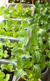 Vue des nombreux pots avec des jeunes plantes Photographie stock libre de droits
