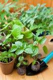 Vue des nombreux pots avec des jeunes plantes Images stock
