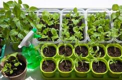 Vue des nombreux pots avec des jeunes plantes Photographie stock