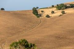Vue des oliveraies et des fermes sur Rolling Hills de l'Abruzzo photo libre de droits