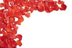 Vue des pétales de rose Photo libre de droits