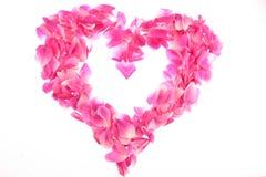 Vue des pétales roses roses Photos libres de droits
