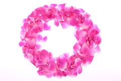 Vue des pétales roses roses Images stock