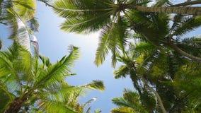 Vue des palmiers de dessous banque de vidéos