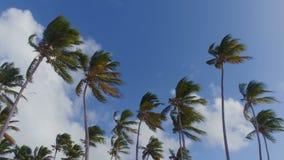 Vue des palmiers de dessous clips vidéos
