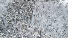 Vue des pins couverts de neige dans la forêt, vue supérieure Photos libres de droits