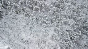 Vue des pins couverts de neige dans la forêt, vue supérieure Photo stock
