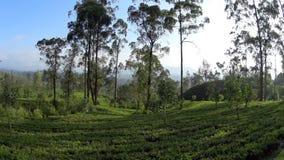 Vue des plantations de thé du train banque de vidéos