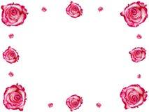 Vue des roses Images stock