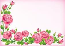 Vue des roses illustration de vecteur