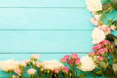 Vue des roses colorées sur le fond en bois bleu Vue supérieure et foyer sélectif Voir les mes autres travaux dans le portfolio Co Images libres de droits