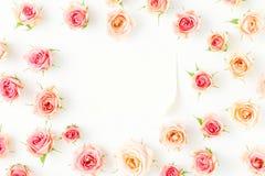 Vue des roses roses avec le papier de feuille sur le fond blanc Photographie stock