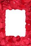 Vue des roses sur Valentine et du jour de mères avec le copyspace Photo stock
