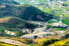 Vue des terrasses de riz vues d'une crête de montagne Photo libre de droits