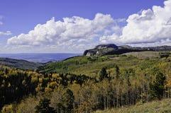 Vue des trembles dans l'automne Photo stock