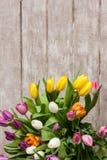 Vue des tulipes colorées de fleur Fond floral Image libre de droits
