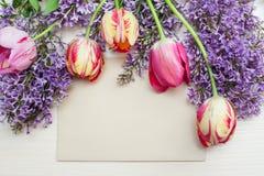 Vue des tulipes et du lilas et endroit pour la carte de voeux des textes Photos libres de droits