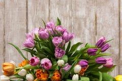 Vue des tulipes roses de fleur Fond floral Image libre de droits