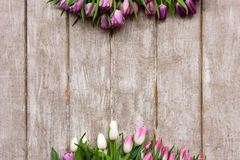 Vue des tulipes roses Fond de source Photo libre de droits