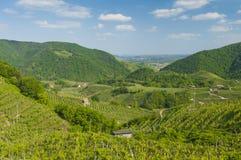 Vue des vignobles de Valdobbiadene, Italie pendant le ressort Photos stock