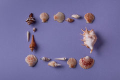 Vue disposée des coquillages Photo libre de droits