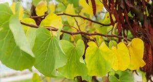 Vue douce de congé multicolore sur l'arbre Image libre de droits