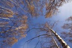 Vue du bas de la forêt d'automne image libre de droits
