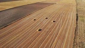 Vue du bourdon de la position curieuse des balles laissées dans la sécheresse du ceral images stock